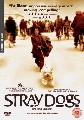 STRAY DOGS (DVD)