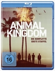 Animal Kingdom - Die komplette 1. Staffel