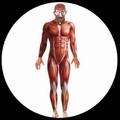 2 x ANATOMIE KOST�M MUSKELN - BODYSUIT - ANATOMY MAN