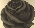 1 x SCHWARZE ROSE - RETRO-TAPETE