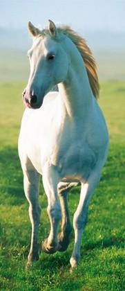 Kindertapete Tapete Pferd pink