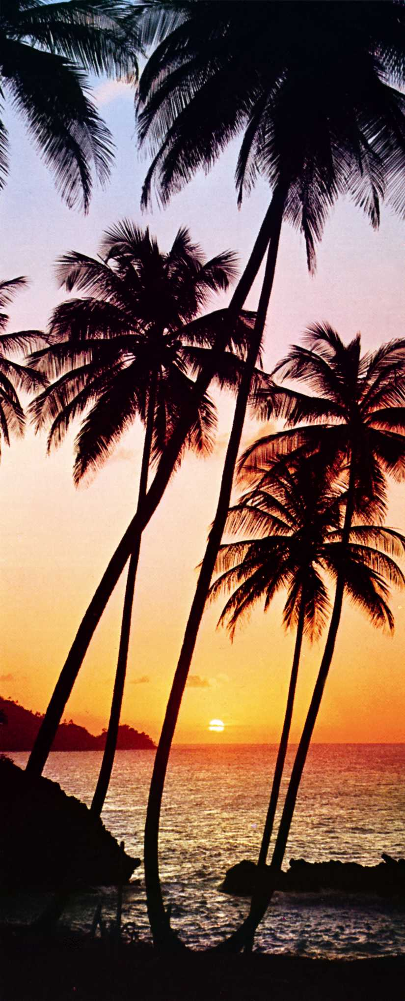 k 39 n 39 k fototapete palmen im sonnenuntergang sunny palms. Black Bedroom Furniture Sets. Home Design Ideas