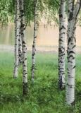 Fototapete - Birkenwald - Nordischer Wald - Nordic Forest