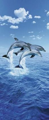 Fototapete - Delphine - Three Dolphins