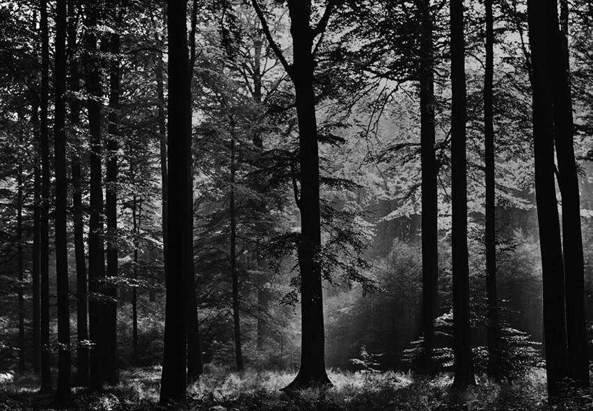 2009921153325 00115 kat - Tapete Wald Schwarz Weis