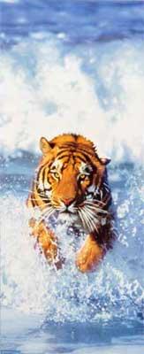 Fototapete Tür Bengal Tiger - Klicken für grössere Ansicht